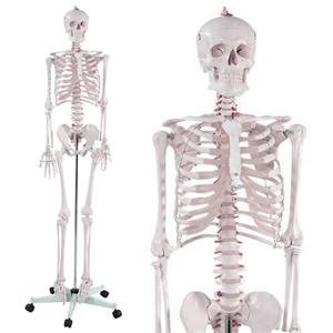 Advanced training with the skeleton dummy - Article image