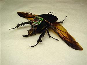 Cyborg-spia volanti controllati dall'uomo: metà macchina metà insetti