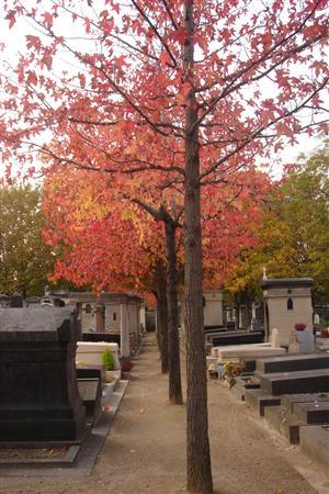 Halloween fa il pieno di turismo cimiteriale