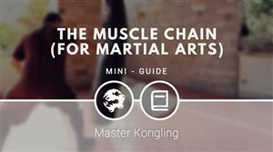 The muscle chain for martial arts (mini guide)