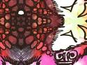CLICK PER INGRANDIRE | TITOLO: Granchio rosso