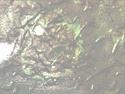 CLICK PER INGRANDIRE | TITOLO: Terra dissipata