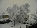 CLICK PER INGRANDIRE   TITOLO: Albero e neve