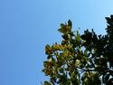 CLICK PER INGRANDIRE   TITOLO: Aspirare al cielo