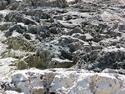 CLICK PER INGRANDIRE | TITOLO: Foresta di pietre