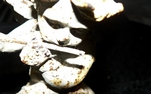 CLICK PER INGRANDIRE | TITOLO: Il flauto del tempo