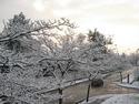 CLICK PER INGRANDIRE   TITOLO: Neve a Legnago