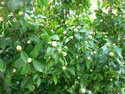 CLICK PER INGRANDIRE   TITOLO: Natura vergine