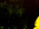 CLICK PER INGRANDIRE | TITOLO: Pantera nel buio di stalingrado