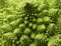 CLICK PER INGRANDIRE   TITOLO: Pianeta vegetale 2