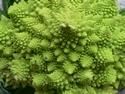 CLICK PER INGRANDIRE   TITOLO: Pianeta vegetale