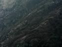 CLICK PER INGRANDIRE | TITOLO: Radici