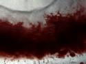 CLICK PER INGRANDIRE | TITOLO: Vita del rosso